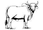 Página para colorir vaca sagrada