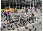Foto alimentando os pombos na Praça de São Marcos