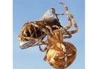 Foto aranha pega uma vespa