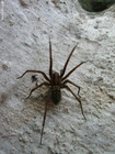 Foto aranha