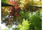 Foto árvores