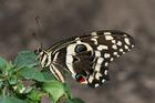 Foto borboleta