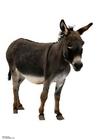 Foto burro