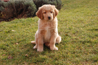 Foto cachorro - filhote