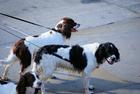Foto cachorros na guia