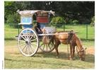 Foto carroça