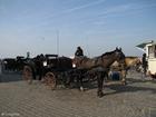 Foto carruagem com cavalo