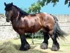 Foto cavalo