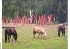 Foto cavalos com bandeiras de prece