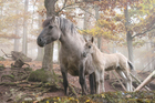 Foto cavalos selvagens