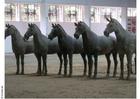 Foto cavalos Xian