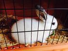 Foto coelho em cativeiro