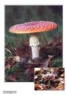 Foto cogumelos