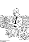 Foto colheita de couve-flor