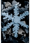 Foto cristal de neve no microscópio