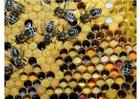 Foto diferentes tipos de pólen armazenado
