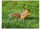 Foto esquilo