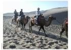 Foto excursão pelo deserto de camelo