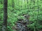 Foto floresta