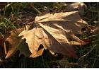 Foto folha de outono