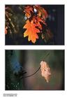 Foto folhas de outono