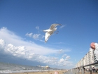 Foto gaivota na praia
