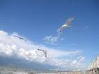 Foto gaivotas na praia 3
