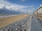Foto gaivotas na praia 4