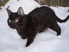 Foto gato preto