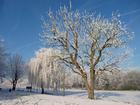 Foto inverno 5
