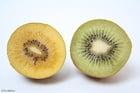 Foto kiwi amarelo e verde