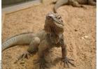 Foto lagarto