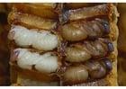 Foto larvas de abelha