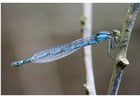 Foto libélula