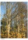 Foto outono - árvores