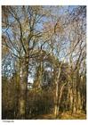 Foto outono na floresta