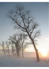 Foto paisagem de inverno