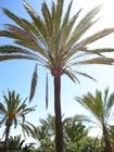 Foto palmeiras