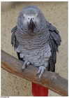 Foto papagaio