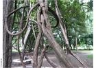 Foto parque em Puna