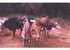 Foto pastor no Quênia