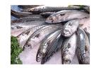 Foto peixe - mercado