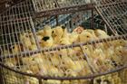 Foto sofrimento animal