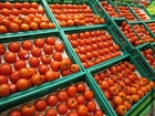 Foto tomates