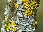 Foto tronco de árvore com fungo