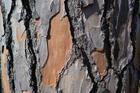 Foto tronco de árvore