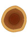 imagem anéis das árvores