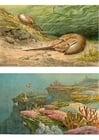 imagem animais marinhos