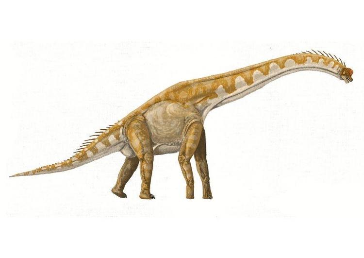 imagem brachiosaurus  imagens grátis para imprimir  img 7214