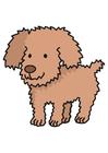 imagem cão